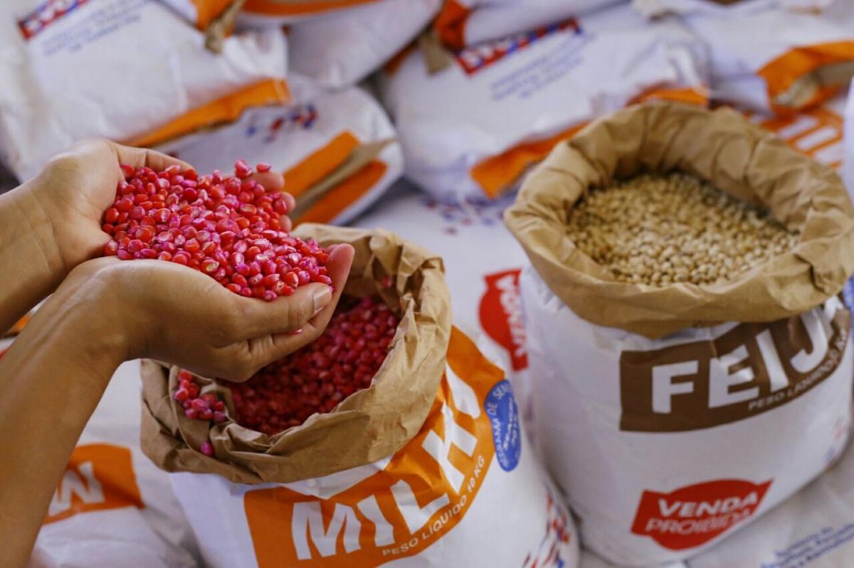 Resultado de imagem para Governador entrega 123 toneladas de sementes em Delmiro Gouveia nesta segunda
