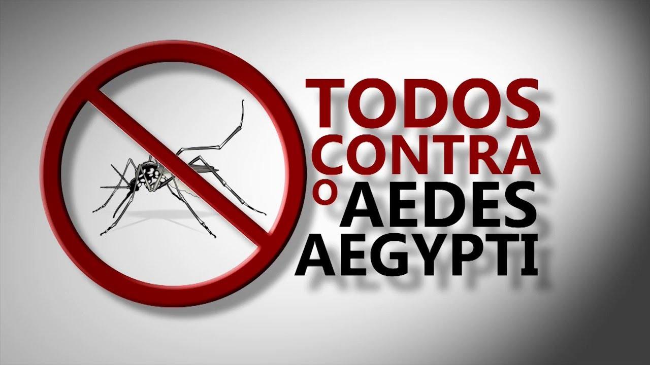 Resultado de imagem para Aedes aegypti