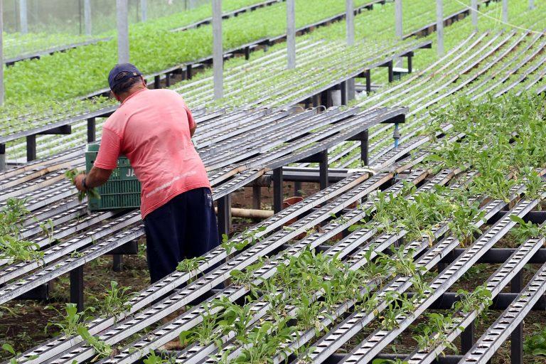 Agropecuária - plantações - agricultura agricultores familiares produtores